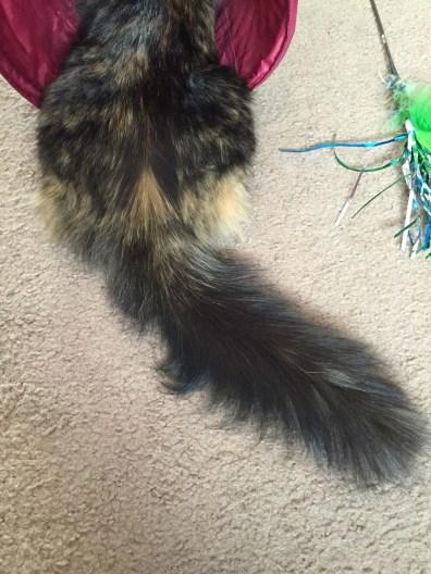 Fluffer Tail