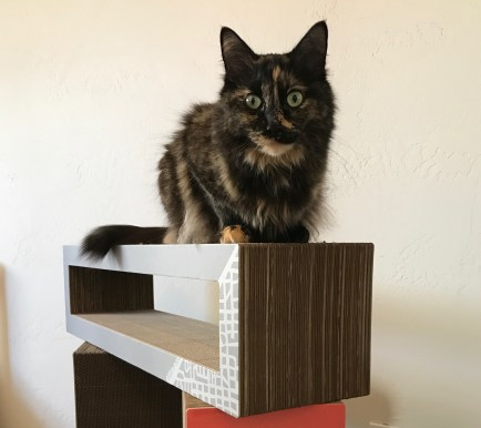 Cali perches on Katris Blocks