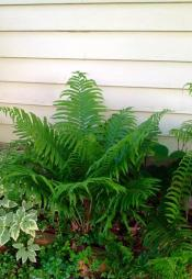 so many ferns