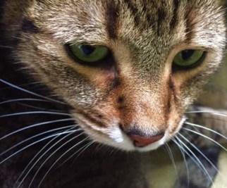 catticus_24