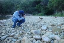 Gerry photographing wekas.