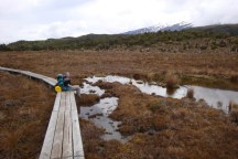 A path through the Rotokawa tarn with alpine wetland species and Mt Ruapehu in the back.