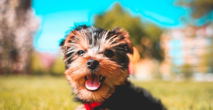 सुखी जीवन जीने के रहस्य (The Secrets To Living A Happier Life)