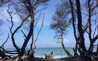 Pantai Goa Cemara, Sensai Wisata Pantai Yang Indah Nan Asri