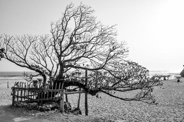 Pok Tunggal Beach Gunung Kidul