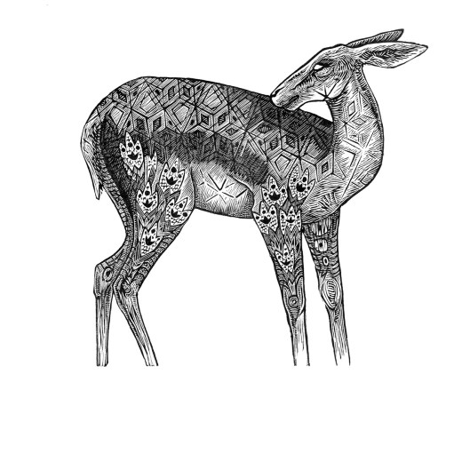 Doe Print Edition by Johanna Mueller