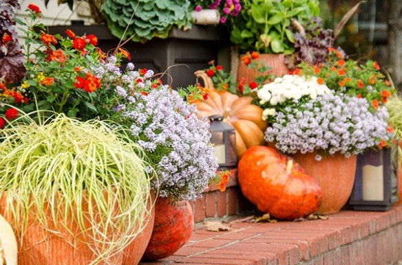 colorful curb appeal for fall