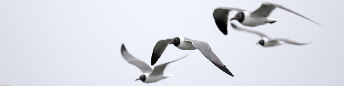 Vogelperspektiven