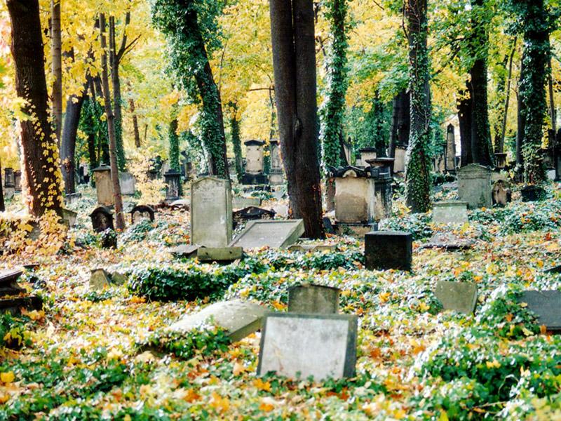 Ansicht des Eliasfriedhofs im Herbst