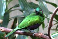 Afrikanska fågelhuset - Oregon Zoo