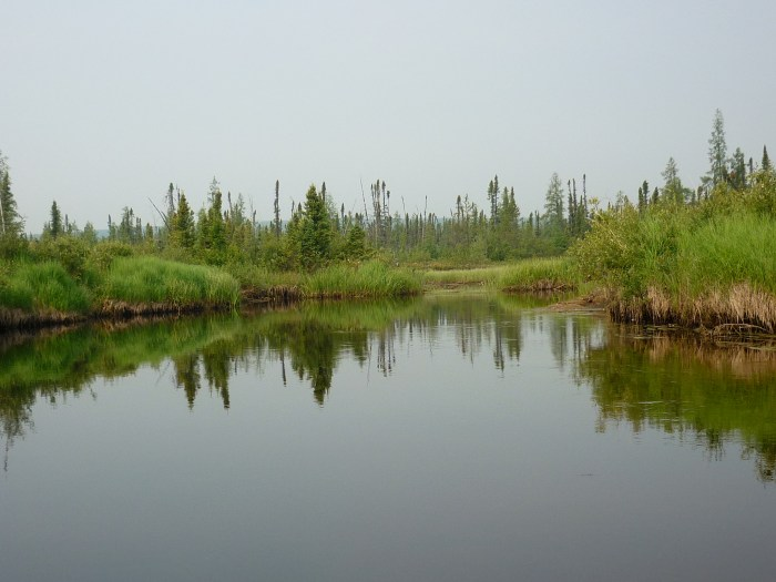 The upper Blondeau has numerous 'swampy expansions', previous travellers described the portage out as commencing at one such expansion which was also the site of a cabin (also described as a Hudsons Bay Co warehouse, turned out there were numerous such expansions all of which had to be checked