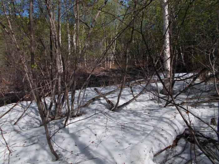 Remnants of winter snow, portage from un-named lake 'A' to lake 'B'