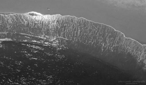 Drone-Bird_on_Beach-1
