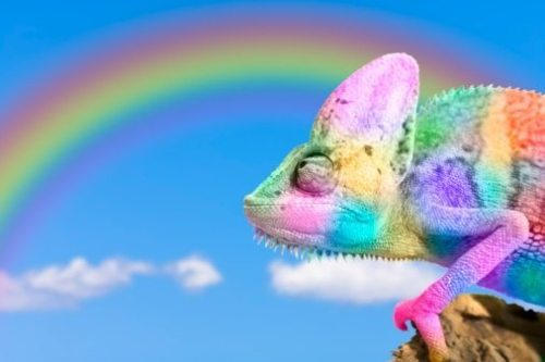 85195705-multi-colored-chameleon-imitating-rainbow-gettyimages