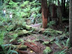 Venturing through the woods on the Sunshine Coast
