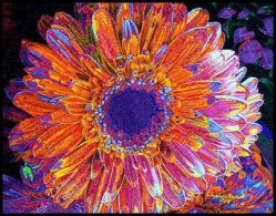 Sunset Flower by Elizabeth Bollwitt