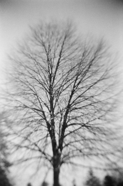 Recesky black and white tree