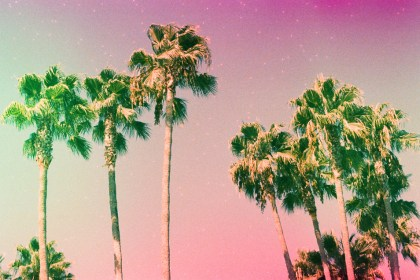 palm trees on cross processed film