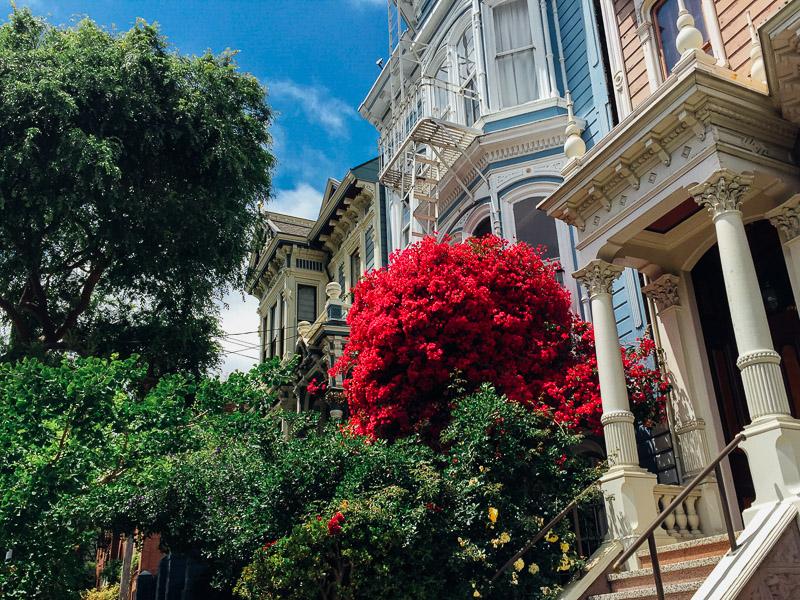 San Francisco victorian iphone vsco
