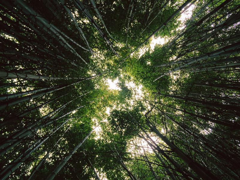 San Francisco bamboo vsco iphone golden gate park