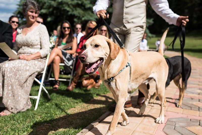 Emily and Ryan Lower Lake Ranch Wedding Photography dog