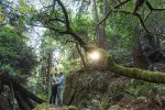 San Francisco redwood engagement photography