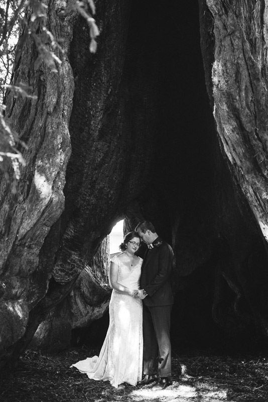 San Francisco Wedding Photography Villa Chanticleer bride and groom eisenhower tree