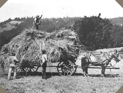 Horses were a vital part of 19th Century Agriculture. Photo Courtesy Google Images.