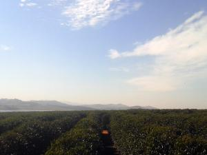 Brazil farm and clear sky - Blog 2013 - John Burton Ltd NZ