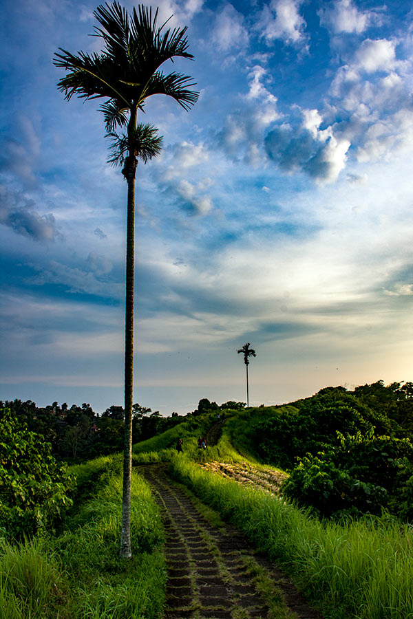 Bali Travel Photography - John Chandler Media