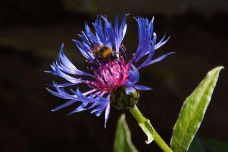 The Humble Bumble Bee
