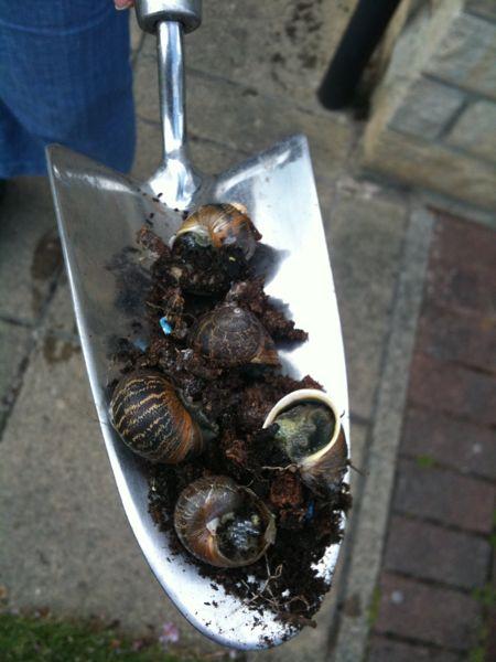 The Snail Problem