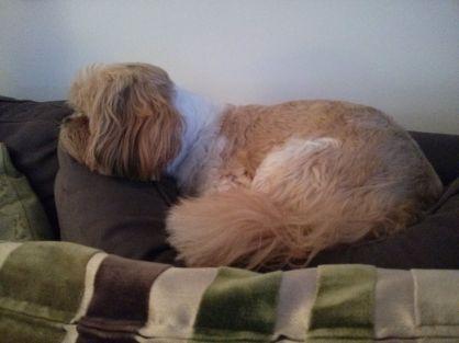 Lazy Beast