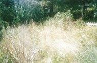 Jungle bashing, garden clearance - Gargrave