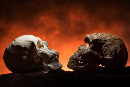 chin-cro-magnoin-neanderthal-chin-