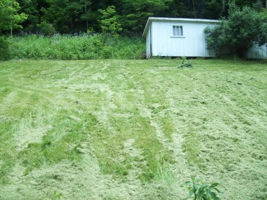 https://i2.wp.com/johndenugent.com/images/grass-clipppings-back-lawn.jpg?resize=520%2C390