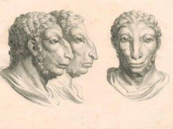 humanimal-sheep-human