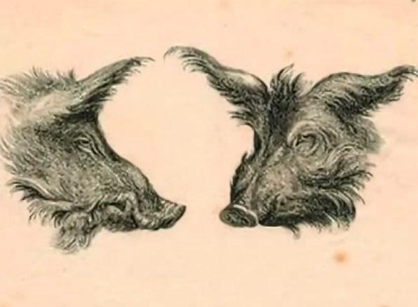 humanimals-boar