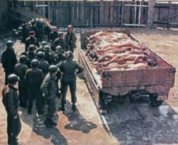 weisse-rheinwiesenlager-dt-Leichen-auf-Lastwagenanhaenger-1945