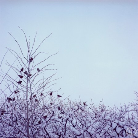 Birds in Tree - $1100 - 12x12 Kodachrome Color C Print in 18x18 frame - Edition of 10