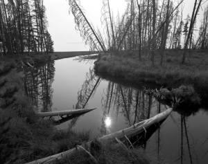 8-1988 Yellowstone N.P.-4x5 film-Linhof camera-4x5-T-max 100-T-max RS developer.