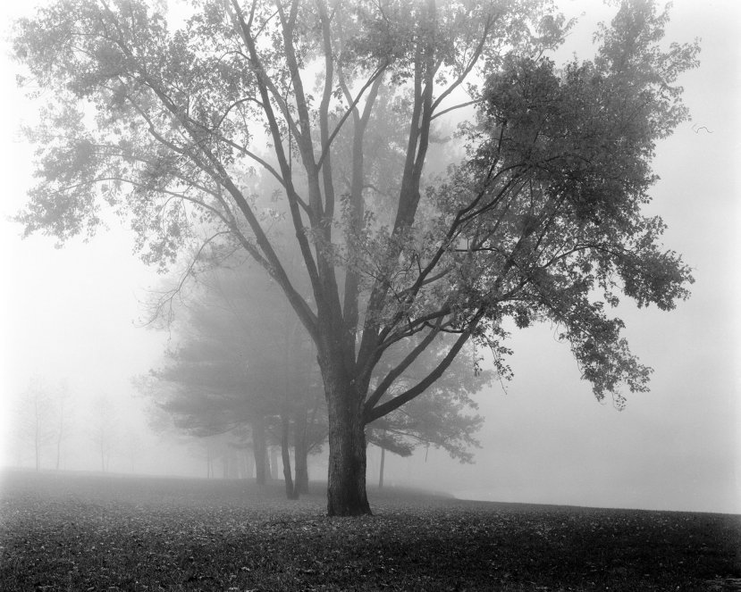 10-30-1982 Fog on Silver Lake-Newtown Pennsylvania-Bucks County-Linhof Technika 4x5 camera-150mm Symmar S-Kodak Tri X Pan Pro 4x5 film-Kodak HC110B developer.