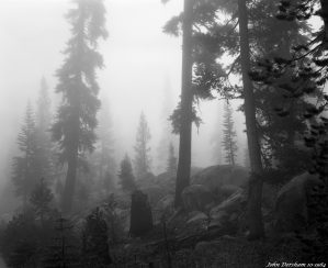 10-1-1984 Yosmite National Park at 5,000 Feet-Rain-Linhof Technika V 4x5 camera-120mm Schneider Symmar S lens-Kodak Tri X Pan Pro 4x5 film-Kodak HC110B developer.