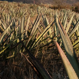 Just Over the Hill, Agave, by John Dowell artist photographer