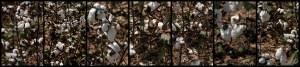 Up Close, Cotton, by John Dowell artist photographer