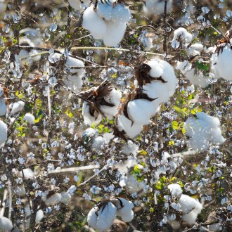 Dottie Smiled, Cotton, by John Dowell artist photographer