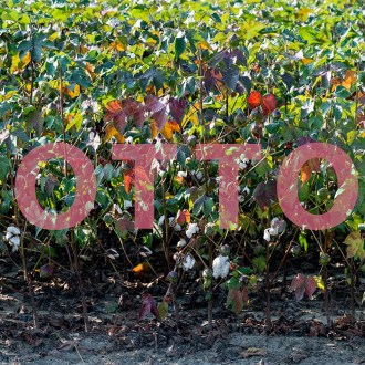 When I See Cotton, I See Red , Cotton, by John Dowell artist photographer