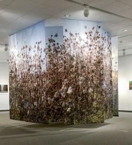 Lost in the Cotton, Cotton, by John Dowell artist photographer