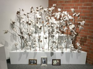 A Moment of Reflection, Cotton, by John Dowell artist photographer