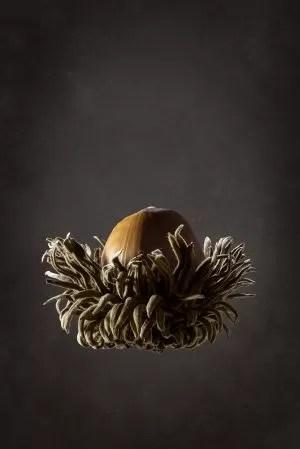 Burr acorn.jpg